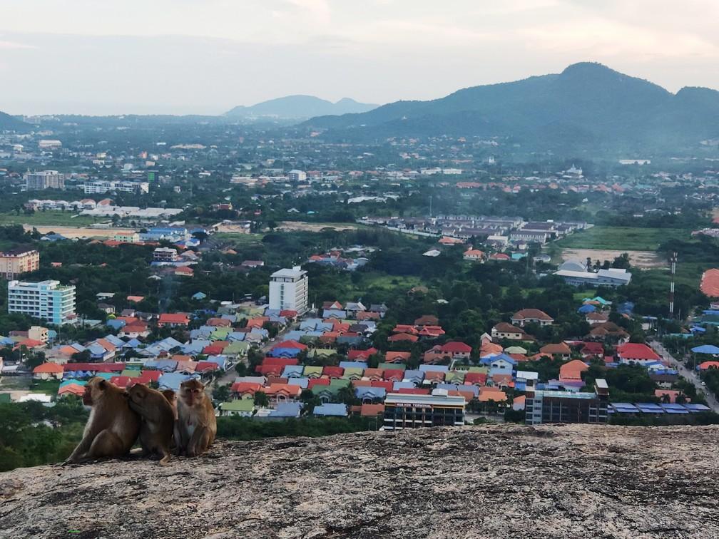Opice sledujú výhľad s nami