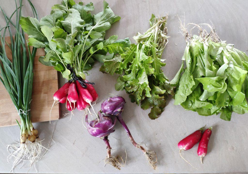 Zeleninka zo záhradky